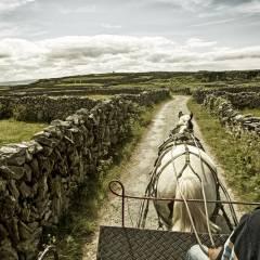 A horse pulling a cart on the Aran Islands